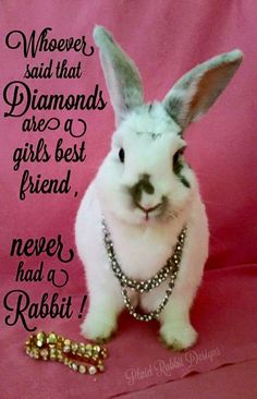 Rabbits are a girl's best friend.