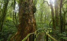 Man Made Bridge Bridges Wooden Forest Tropical Rainforest Jungle Green Wallpaper Forest Wallpaper, Green Wallpaper, Wallpaper Backgrounds, Wallpaper Jungle, Old Trees, Tropical Forest, Fabric Wall Art, World Of Color, Background Images