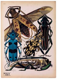 Insects, Plate 3