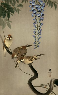 Ohara Koson Title:Sparrows and Wisteria Date:Ca. Japanese Painting, Chinese Painting, Chinese Art, Ohara Koson, Art Asiatique, Art Japonais, Japan Art, Tokyo Japan, Japanese Prints