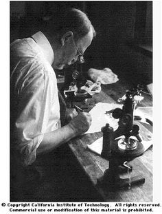 Thomas Hunt Morgan (September 25, 1866 – December 4, 1945).  Nobel Prize in Medicine in 1933 for discoveries relating the role the chromosome plays in heredity.