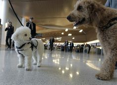 San Francisco airport offers therapy dogs for weary travelers.