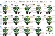 Cannabis Nutrient Deficiencies & Excesses