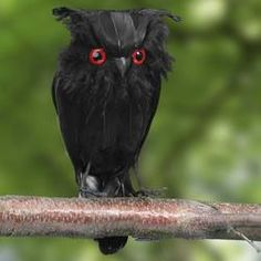$10.00 Black Feathered Artificial Owl - Crows - Owls - Bats - Spiders - Fall and Halloween - Holiday Crafts