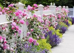 how to paint flowers on a picket fence - Google Search