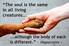 """The soul is the same in all living creatures … although the body of each is different.~ Hippocrates"