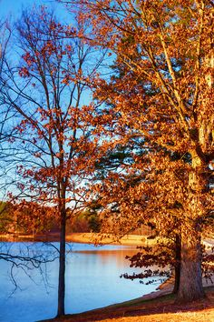 The trees at lakeside are losing the last vestiges of their Fall foliage as Winter is here to stay.