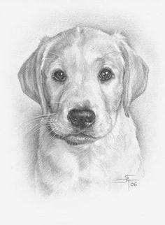 Dog Pencil Drawing, Pencil Drawings Of Animals, Cool Art Drawings, Animal Sketches, Realistic Drawings, Art Drawings Sketches, Drawings Of Dogs, Art Du Croquis, Dog Portraits