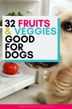 Your dog will love these easy to eat fruits and vegetables for dogs. Make Dog Food, Homemade Dog Food, Pet Food, Dog Nutrition, Animal Nutrition, Easy Dog Treat Recipes, Dog Food Recipes, Fruits For Dogs, Dog Care Tips