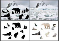 """""""Où vis-tu?"""" les animaux dans leur milieu naturel : la banquise au pôle nord"""