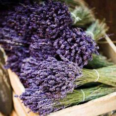 Farm Becomes Agritourism Stop - Farm and Garden - GRIT Magazine Infuse your whole farm with the sweet smell of lavender when you start your own lavender farm.Infuse your whole farm with the sweet smell of lavender when you start your own lavender farm.