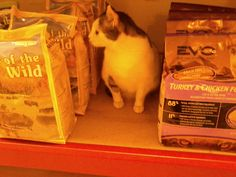 Once my cat actually came shopping with me. He liked the dog food.