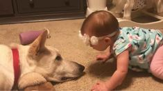 Baby girl Quinn, from San Antonio, Texas, adores the family's white German Shepherd dog Larry and is melting hearts after she was caught on camera giving him lots of kisses. Cute Puppies, Cute Dogs, Dogs And Puppies, Cute Babies, Doggies, Cute Funny Animals, Funny Cute, Funny Dogs, Animals And Pets