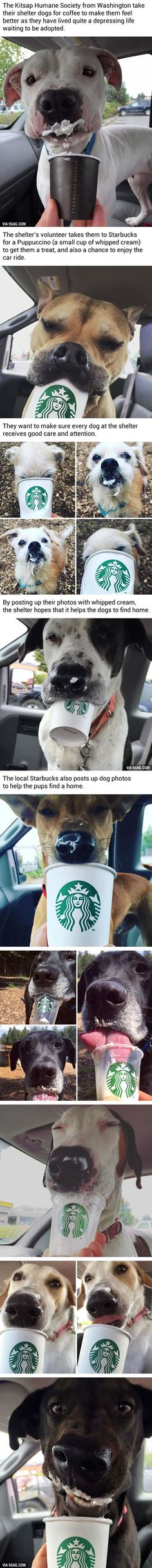 """Honestly, this bring joy to my heart. Love these pups ❤️ Look at 'em, enjoying their Puppuccinos! Shelter Takes Dogs For """"Puppuccinos"""" To Help Them Find Home Animals And Pets, Baby Animals, Funny Animals, Cute Animals, Cute Puppies, Cute Dogs, Dogs And Puppies, Doggies, Chihuahua Dogs"""