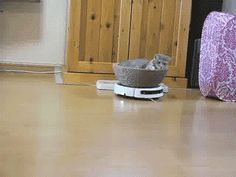 lolz online - Cat Rides Roomba In Style Cute Funny Animals, Cute Cats, Funny Cats, Funny Pix, Funny Pictures, Hilarious, Crazy Cat Lady, Crazy Cats, Curious Creatures