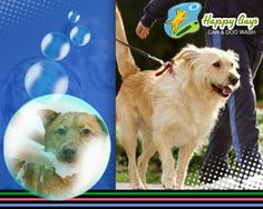 73 best dog and pet wash calgary images on pinterest animal bring your dog to professional dogwash station and enjoy the utility of all the self solutioingenieria Choice Image