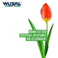Balkonpflanzen märz  WUXAL Universaldünger. Optimal für Kakteen, Sukkulenten ...