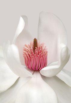 Maria-Magnolia 1