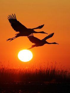Beautiful Nature Wallpaper, Beautiful Sunset, Beautiful Birds, Bird Pictures, Nature Pictures, Beautiful Pictures, Silhouette Painting, Sunset Silhouette, Sunset Wallpaper