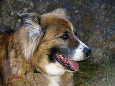 72 Hour Emergency Kit, Old Farmers Almanac, Life Savers, New Puppy, Corgi, Saints, Old Things, Puppies, Dog Stuff