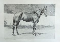 Cole and Springstein 1896 rare antique painting  Fantasy   Race Horse  oringial antique print art