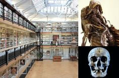 Barts Pathology Museum, Queen Mary, University of London