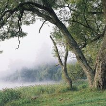 Fototapete - Tree in a Fog
