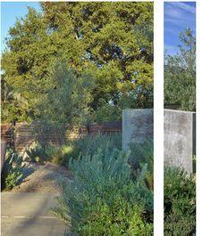 Landscaping Design On Pinterest Drought Tolerant