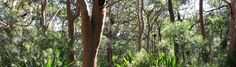 Illawarra Bushlands Database  No link, web address only- http://bushlands.southerncouncils.nsw.gov.au/species-list?siteID=24