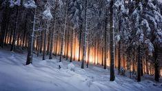 Moarrr! Красивые картинки Обои Фото Природа лес