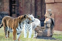 Lions with Statue