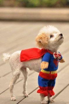 super pup!