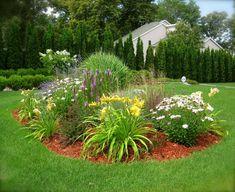 jardin d'ornement, parterre de fleurs jaunes, marguerites et buis taillés