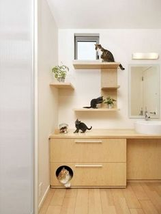 Wretched Excess Dept: A House Designed For Cats : TreeHugger