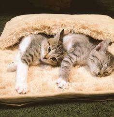 Meet Tora and Saba, two kittens that have found the ultimate remedy against the winter blues