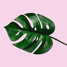 """1,952 Likes, 10 Comments - Minimal Zine (@minimalzine) on Instagram: """"SpecialFeatured @PlantsOnPink A project curated by @lotte.lotte.lotte. Plants against fifty shades…"""""""