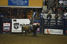 Mille Fiori Favoriti: Super Shootout Rodeo at the Denver national Western Stock Show