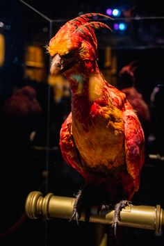 http://www.natacha-birds.fr/wp-content/uploads/2015/04/exposition-harry-potter-paris-60.jpg
