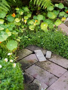 Concrete mobile phone sculptures by Will Coles are indestructible garden art! Seaside daisy (Erigeron karvinskianus) and nasturtium (Tropaeolum majus) jostle for space, with Sarah trimming the daisy regularly to keep it under control. Photo – Daniel Shipp.