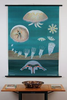Zoological Pulldown School Chart--Jellyfish--Mid-Century Classroom Science Poster 1950s