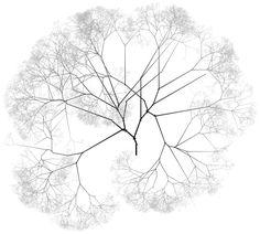 tree top png에 대한 이미지 검색결과