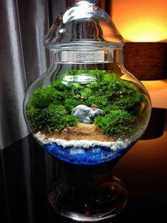 Mahmut Kırnık Terrarium Tank, Terrarium Ideas, Moss Terrarium, Garden Terrarium, Bottle Garden, Glass Garden, Garden Art, Mini Gardens, Miniature Gardens