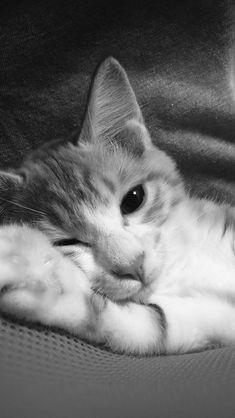 Cute Lazy Cat Animal Dark #iPhone #5s #wallpaper