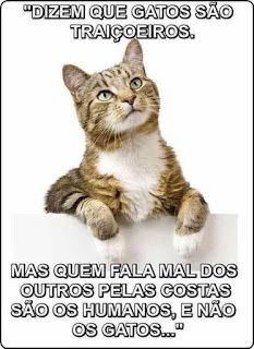 Nunca li tanta verdade 😼 ⠀⠀⠀⠀⠀⠀⠀ ⋆ ⋆ Dm for credits! Love Pet, I Love Cats, Cool Cats, Funny Animal Memes, Funny Cats, Mean Cat, Dog Memorial, Cat Quotes, Beautiful Cats