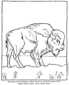Buffalo Head Coloring Page | Buffalo coloring pages