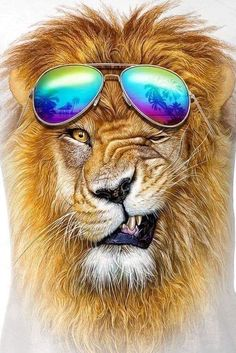 Winking Lion Cool Men T-shirt for Sale. Lion Images, Lion Pictures, Animals And Pets, Funny Animals, Cute Animals, Beautiful Cats, Animals Beautiful, Tier Wolf, Amazing Beasts