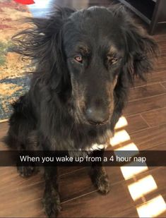 Funny Animals - Here is a hilarious funny animal picture picdump Most of it consists of cute animals doing funny things. Some funny animal fails. Anyway, check out these 22 funny pics of funny animals. Funny Animal Memes, Dog Memes, Cute Funny Animals, Funny Animal Pictures, Funny Cute, Funny Dogs, Funny Shit, Funny Memes, Hilarious Pictures