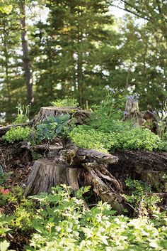 Chip and Sally Akridge's stumpery garden in Maryland is filled with upended tree stumps, their exposed roots gnarled around cascades of ferns, hellebore, and primrose. Photo by Patricia Lyons. | Garden & Gun