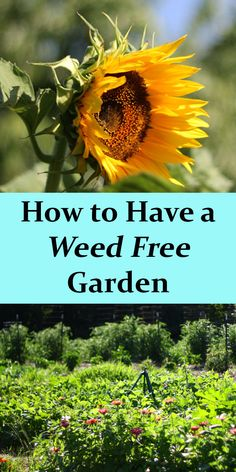 Learn how to make your garden weed free to maximize your produce yields and grow more vegetables!