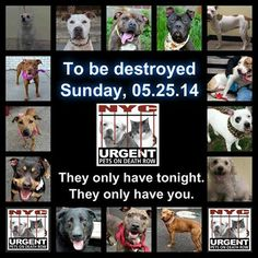 TO BE DESTROYED - 05/25/14 PITTIES ARE IN DANGER AGAIN. ALL THESE DOGS COUNT ON US!!! LET'S NOT LET THEM DOWN!!! PLEASE OPEN YOUR HEARTS AND PLEDGE, TAKE THEM HOME, BUT BE QUICK AS TIME IS TICKING AWAY. THE LIST IS VERY LONG AGAIN AND WE WE HAVE SOLITTLE TIME SO BE QUICK WHEN MAKING UP YOUR UP.   https://www.facebook.com/media/set/?set=a.611290788883804.1073741851.152876678058553&type=3